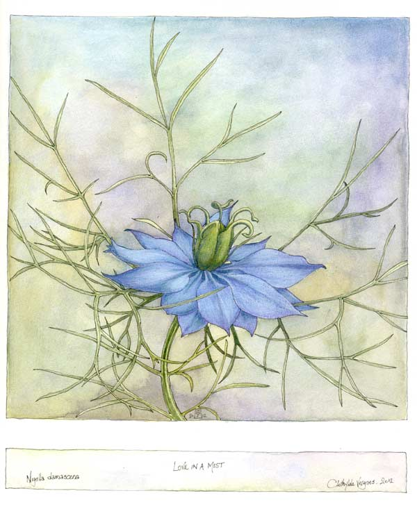Love in a mist I